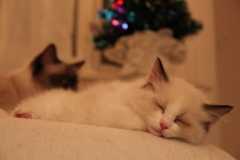 Untamo odottaa joulua Ilmattaren valvoessa unta