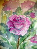 """Toscanan ruusu"""