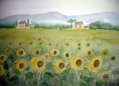 """Toscanan auringot""2"