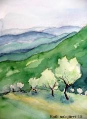 Oliivipuita rinteessä