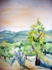 Kaktus ja oliivipuu maisemassa