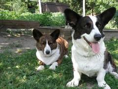 Kerttu-ja Emma-koira