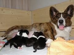 Kertun kaikki neljä vauvaa.
