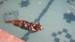 Kerttu uimassa