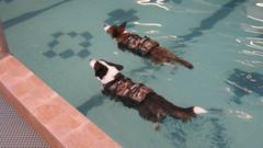 Uimakilpailu