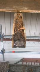 Lahonneen kannattimen vaurio oli piilossa lautojen alla.