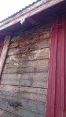 Tavarasuojan katto oli vuotanut vuosia ja aiheuttanut lahovaurion hirsiseinään.