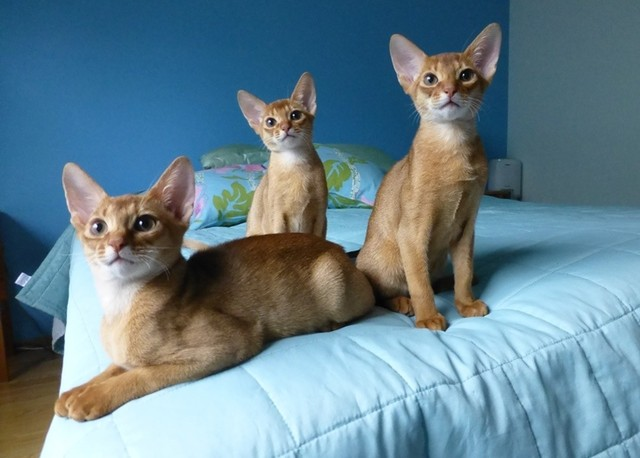 Rasmus, Ruusu ja Rufus