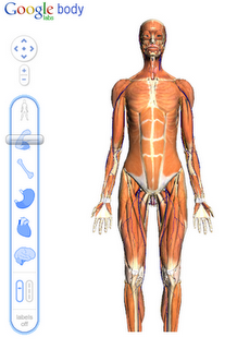 bodybrowser_2.png