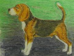 beagle_pastelli