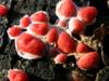 Sientä kannolla