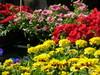 Kukkia Porvoon torilla