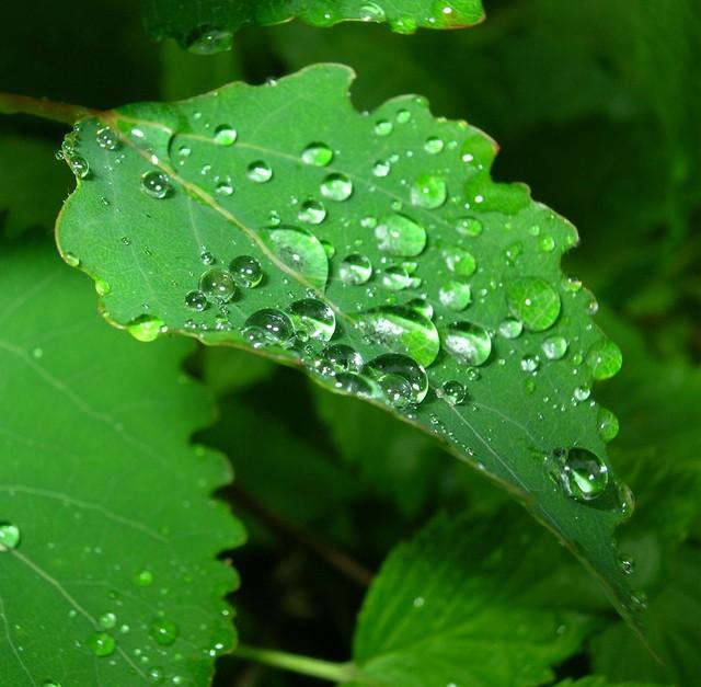 Sateen jälkeen