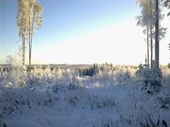 Pajumäki 20.11.2010