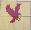 kotka_eagle