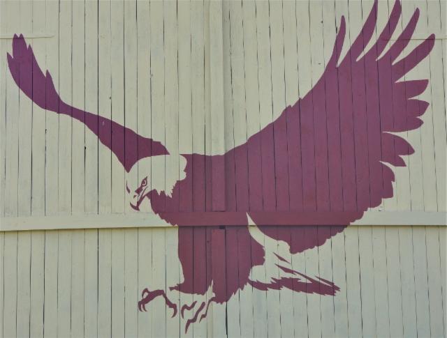 merikotka_white-tailed_eagle