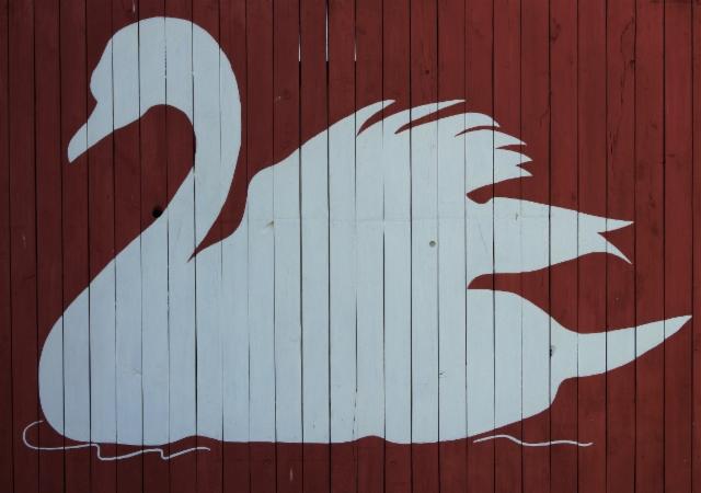 joutsen_swan