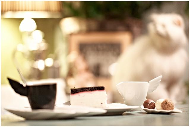 Kattaus Kahvils Villipuutarhassa