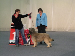 winter_dog_show_tammi_2010_042.jpg