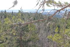 puhdasta ilmaa naavoineen puissa