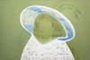 Sirpa Häkli, Taidehistorian naiskuvia: Sinihattuinen nainen (Vigée le Brun) | Images of Women in Art History: Woman with a Blue Hat (Vigée le Brun), 2013