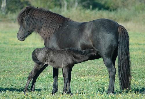 Brynja & Freyr