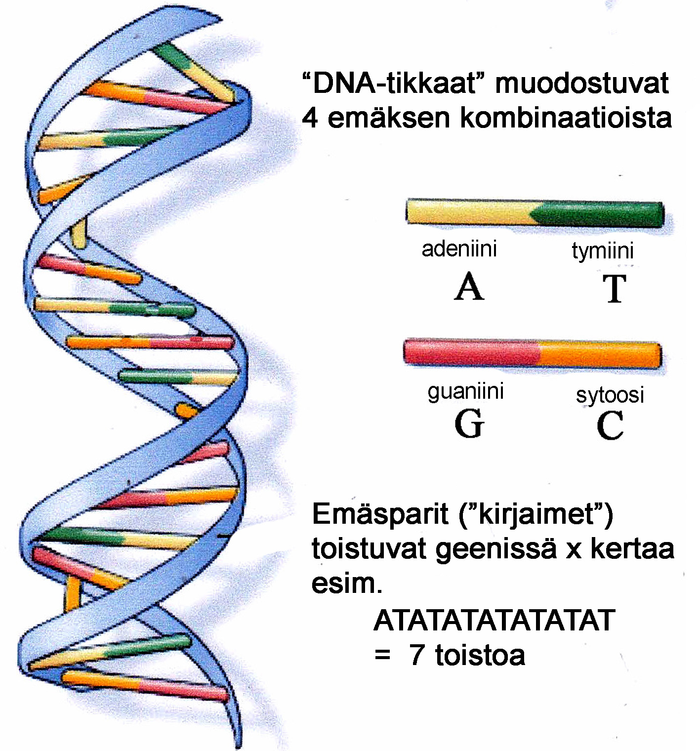 dna_emakset_copy.jpg