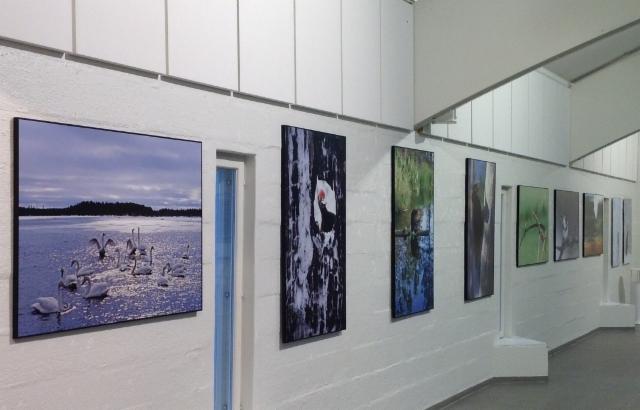 Hannu Hautalan kuvia