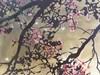 yllatysperhoset