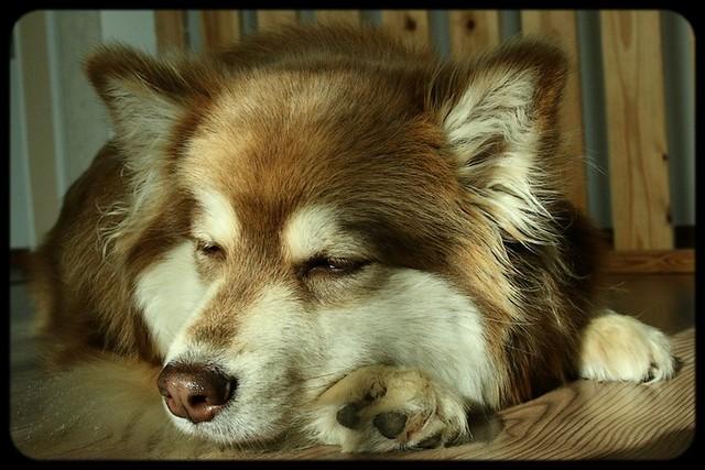 Malla nukkumassa