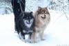 Hertta ja Otto jouluna 2016