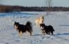 Lumi, Missi ja Halla helmikuu 2018