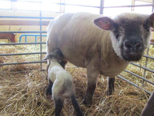 Luppa ja tytär