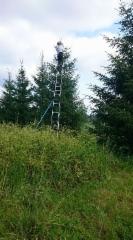 Latvan varttaminen 5-6 metrin korkeuteen.