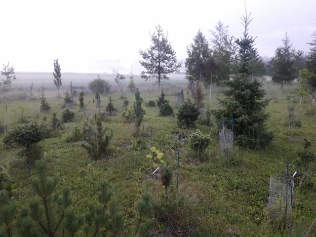 yönäkymä arboretumista heinäkuussa 2018
