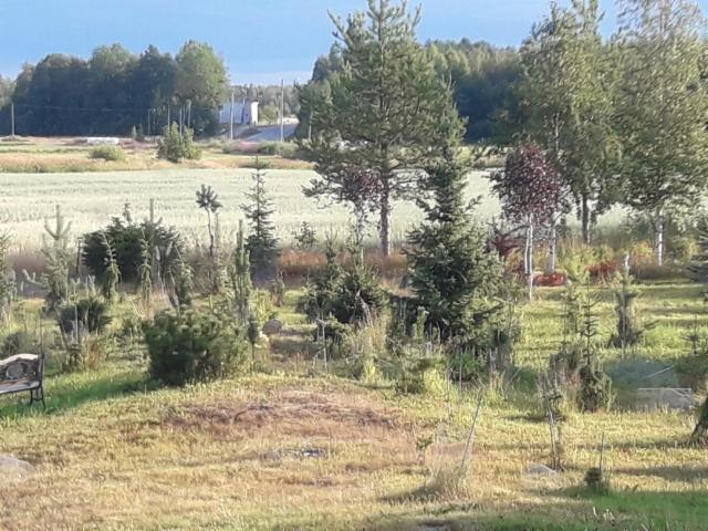 arboretum-nakyma_loppukesasta