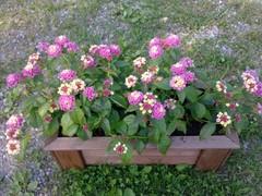 kukkia_rannassa
