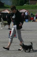 Tuurin koiranäyttely 9.6.2013
