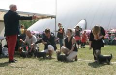 Tuusulan koiranäyttely 30.6.2013