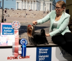 Helsinki Winner 8.12.2017