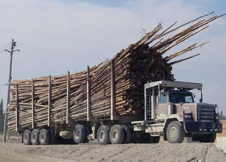 USA  Canada logging06-xd