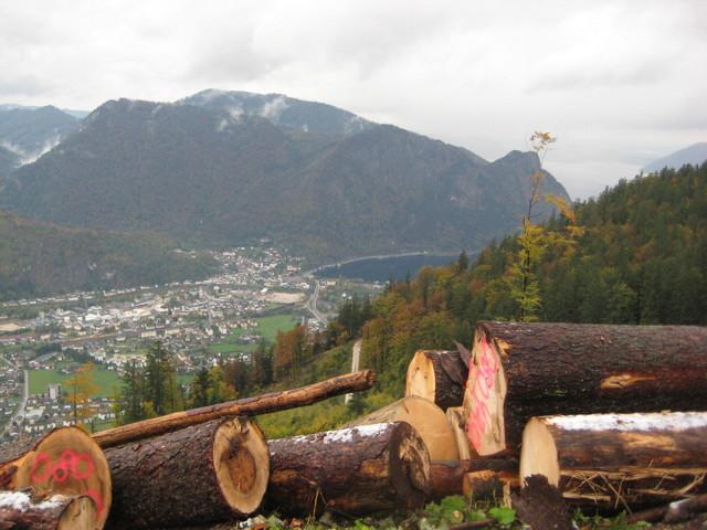Puunkorjuuta Alpeilla
