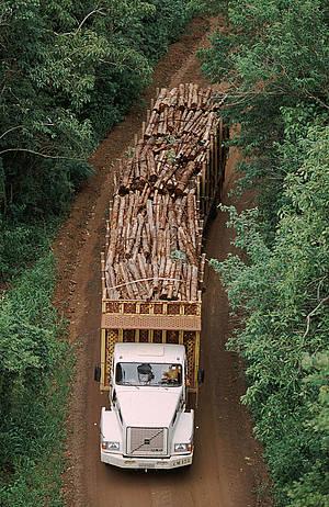 Austraalian liikennettä ei rajoiteta painoilla, eikä pituuksilla.