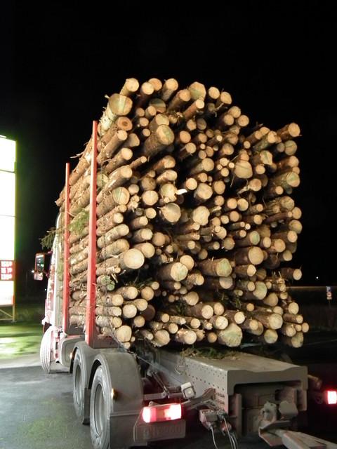 Siinä on pojat puuta jonkinverran yhdessä nipussa!!