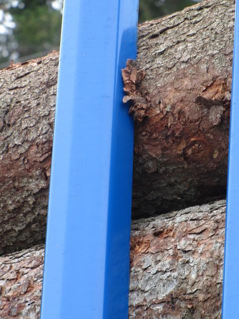 Näin tolppaliukuesteet purevat kiinni puuhun. Nippu pysyy paikoillaan ja ajokki ei huoju.