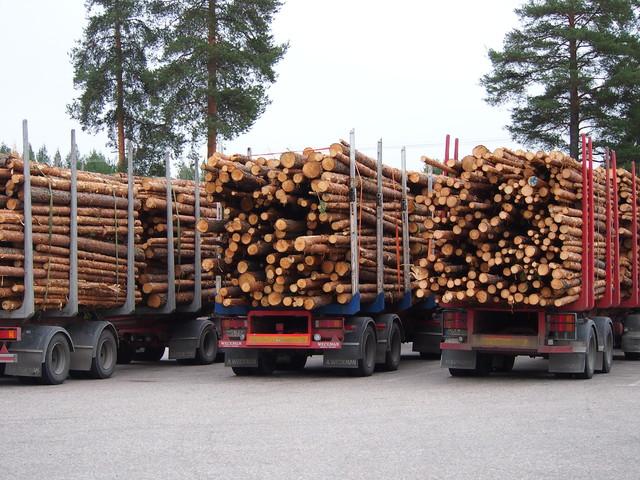 Terminator XXL (vas.), Exte C60(kesk.) ja Terminator XXL (oik.). Puut samasta pinosta ja kaikki 60 tonnisina . Kuormatilojen kokoero näkyy silmällä.