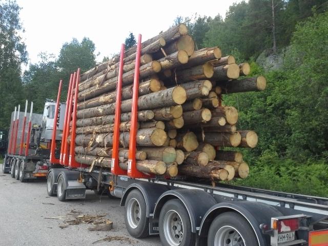 Puu on tuotetta, suoraa ja pitkääkin, mitähän mahtaa koenippu painaa ???