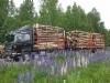 Satatonnisen + 4 tn puutavaravaunu kokonaispainolle 42 tn. kaksi 17 tonnin nippua lakipainoilla.