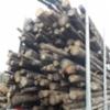 Kuorman laatu on suoranaisessa yhteydessä kuormaajan käyttäjään - metsästä tehtaalle.
