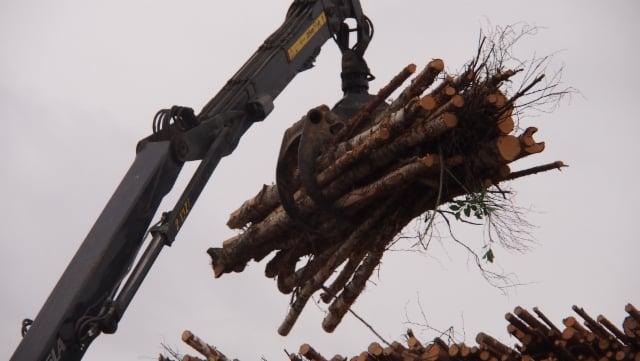 Sidonnan yksi vaikuttimista on puutavara itse.